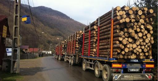 """Colonialism """"de urgență"""": Ministrul Mediului REFUZĂ să interzică TĂIEREA pădurilor!"""