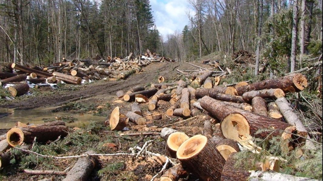 Controale în pădure blocate de Minister