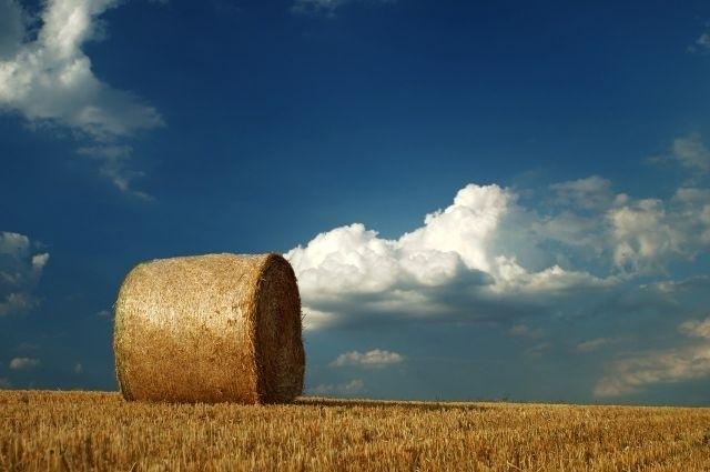 """""""Hărnicie"""" a capitalului străin în agricultură"""
